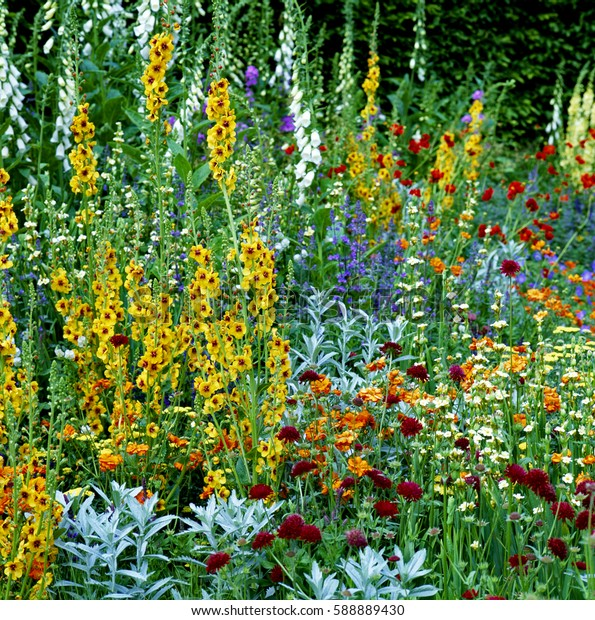 Mixed Border of colorful flowers making interesting color cobinations
