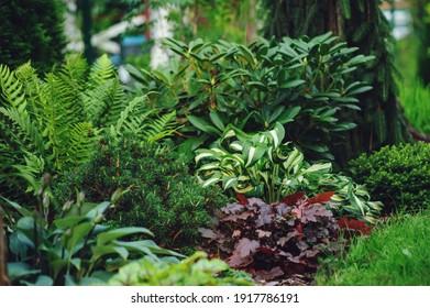 mixed border with shady tolerance plants - ferns, hostas and heucheras in summer garden