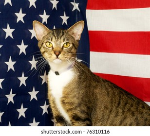 Mixed Breed cat with American Flag background