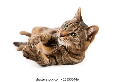 Mixed breed cat on white background