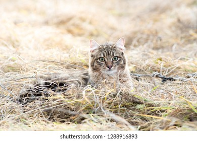 Mixed breed cat outdoor field grass dry fluffy one portrait stray looking at camera