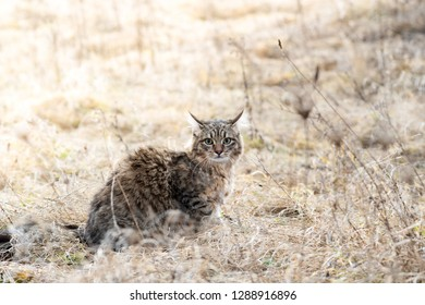 Mixed breed cat outdoor field grass dry fluffy one portrait stray