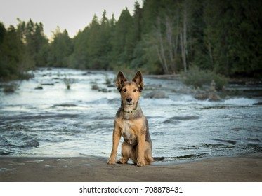 mixed breed  dog by river