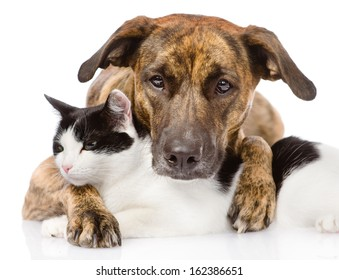 mixed breed dog and cat lying together. isolated on white background