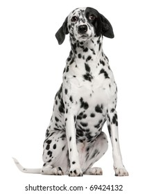 Mixed breed dog with a Dalmatian, 2 years old, sitting in front of white background