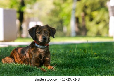 A mixed breed dog enjoy in park