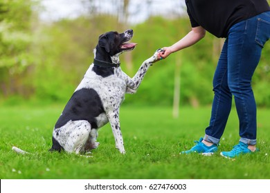 mixed breed dog gives a woman the paw