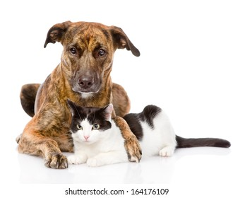 mixed breed dog hugging a cat. isolated on white background