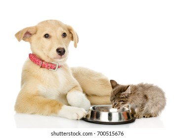 Mixed breed dog and kitten eating together. isolated on white background
