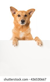 Mixed breed dog looking over a wall
