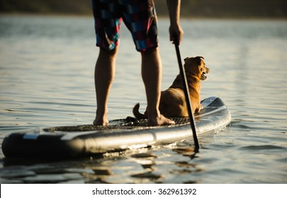 Mixed breed dog lying on the front of a paddle board with a man paddling
