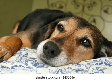 mixed breed dog resting on blue and white floral comforter