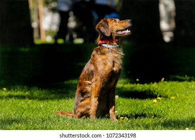 A mixed breed dog sitting in the grass