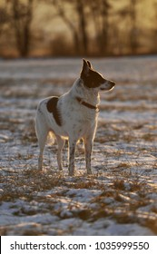 Mixed breed dog standing in a winter landscape
