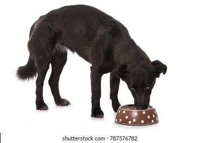 Mixed breed dog wih food bowl