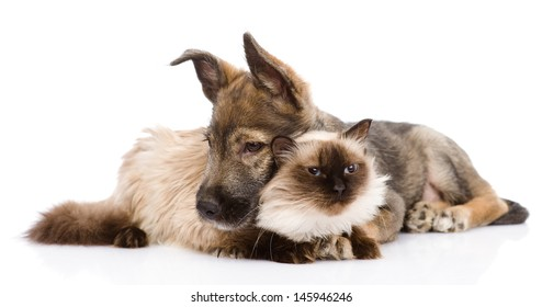 mixed breed puppy and cat together. isolated on white background