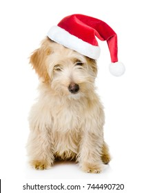 Mixed breed puppy in red christmas hat. isolated on white background