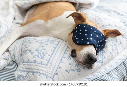 Mixed Breed Short Haired Dog Sleeping on Bed