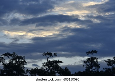 Mixed cloud type over pine forest