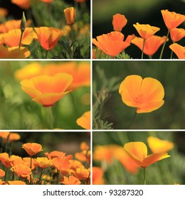 mixed collage pictures of oranges California poppies