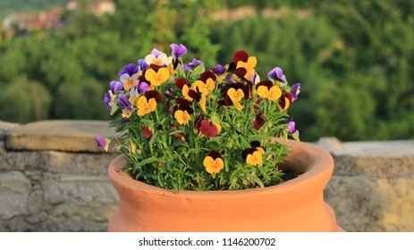 Mixed color flowers