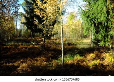 Mischwald im Herbst mit einem schönen Aussehen.