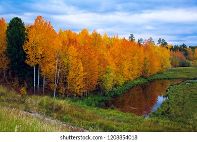 A mixed forest of hardwoods with yellow and red leaves rests on the floodplain of a dried-up river