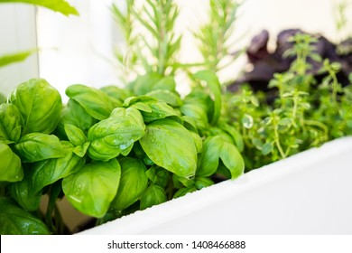 Mixed fresh aromatic herbs growing in pot, urban balcony garden with houseplants closeup