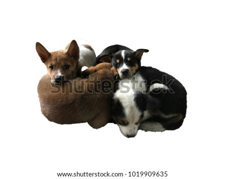 Mixed Kind Cute Puppies Cuddle Stock Photo Edit Now 1019909635