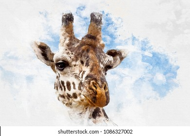 Mixed media closeup of the head of a giraffe against summer blue sky background