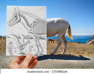Mixed media image showing a hand-held piece of paper with a pencil drawing depicting X-ray like internal structures, bones and skulls of a horse and bird with a nice seascape in the photo background.
