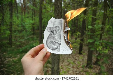 Mixed media photo showing a hand-held piece of paper burning with a drawing on it depicting a cute koala on a tree trunk with a green forest in the photo background