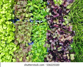 Mixed Microgreens