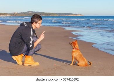 Mixed mongrel dog, short hair, receiving instructions from your trainer and coach at the beach. It is a cross Chihuahua and Miniature Pinscher
