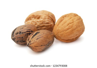 Mixed nut selection of Brazil, almond, walnut and hazelnut.
