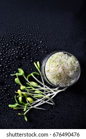 Mixed organic micro greens on black background with water drops. Fresh sunflower and heap of alfalfa micro green sprouts for healthy vegan food cooking. Healthy food and diet concept. Cut microgreens