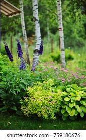 mixed perennial border with hostas, spirea japonica, delphinium and other perennials in summer garden