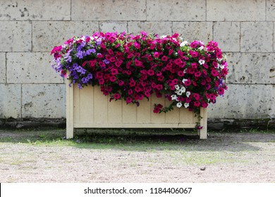 Mixed petunia flowers. Petunias in Floral Detail Background Image. Beautiful petunia flower wallpaper. Multicolored petunias grow in a box in the square in front of the Gatchina Palace