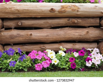 Mixed petunia flowers. Petunias in Floral Detail Background Image. Beautiful petunia flower wallpaper. Multicolored petunias grow near block timber.