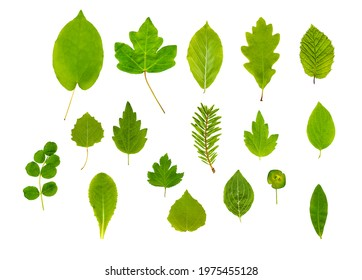 Mixed Plant and Tree Leaves alpha - Shutterstock ID 1975455128