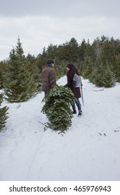 A mixed race couple searching for and cutting down a Christmas Tree
