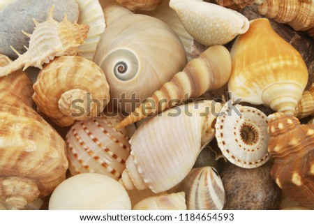 mixed-seashells-background-lots-differen