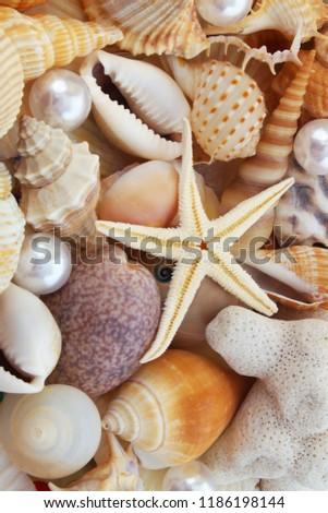 mixed-seashells-starfish-pearls-ckose-45