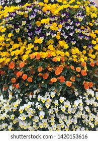 Mixed tricolor pansy flowers  - viola blossom - viola tricolor