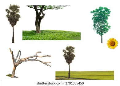 Mixed types of tree and plant with landscape isolated on white background