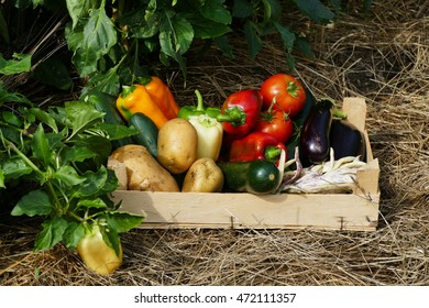 Mixed vegetables in crate from permaculture garden on hay