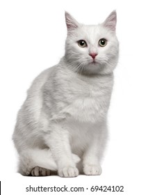 Mixed-breed cat, 1 year old, sitting in front of white background