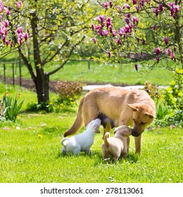 Mixed-breed cute little puppies playing with her dog mom outdoors on a meadow on a sunny spring day.