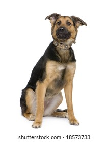 Mixed-Breed Dog between a german shepherd and a beauceron in front of a white background