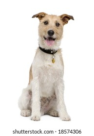 Mixed-Breed Dog with a terrier (2 years) in front of a white background